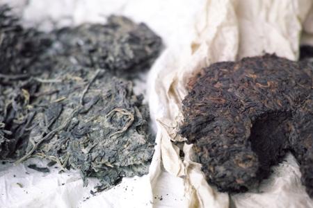 生茶と熟茶の黴
