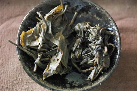 右が納豆菌の繁殖した茶葉