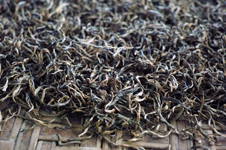 巴達金針紅茶