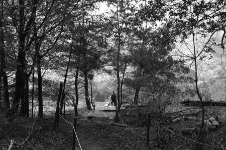 林を抜ける