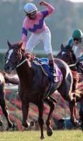99年11月7日、菊花賞 1着ナリタトップロードと渡辺騎手