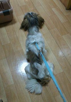 セーラ狂犬病2.jpg