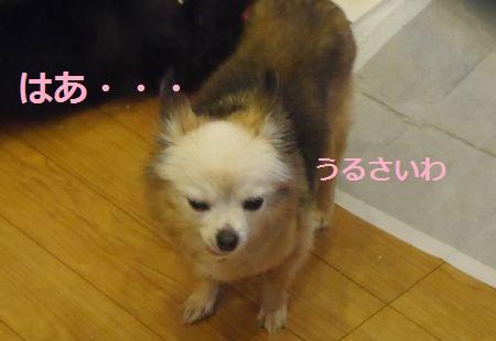 ぼーる8.jpg