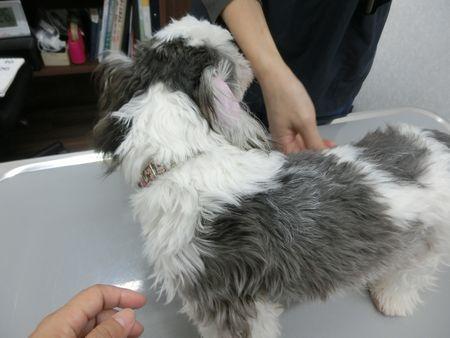 あん狂犬病2.jpg