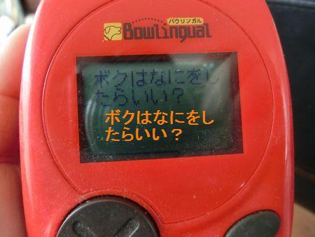 なつばう6.jpg