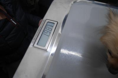 P2460882.JPG