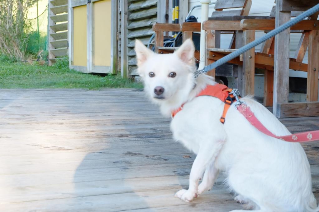 10月のオーベルジュring woodfield その2 cafe massa with dogs
