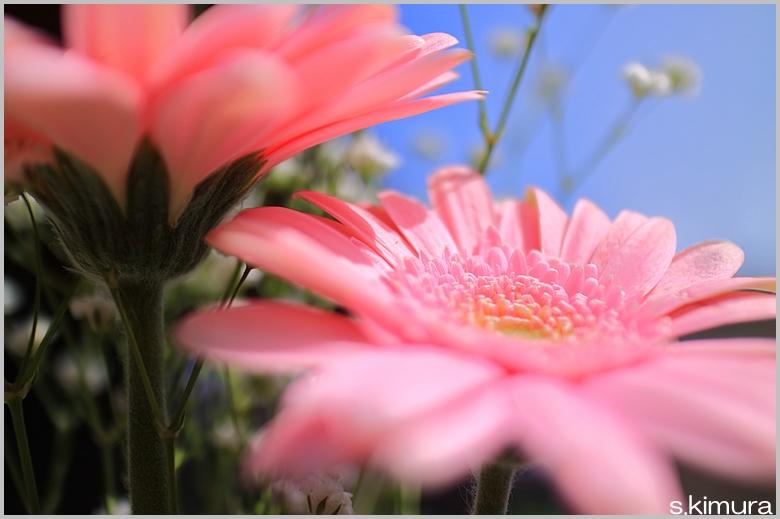 s-IMG_0100.jpg
