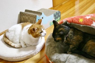 猫 ベッド 雑貨