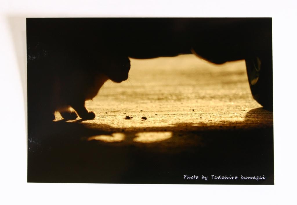 熊谷忠浩 秋田 かぎしっぽ 猫雑貨 写真 カメラマン 猫写真