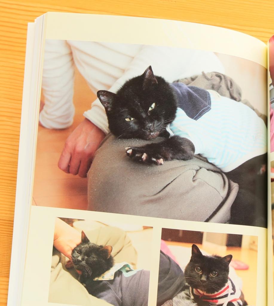 それでも人を信じた猫 黒猫みつきの180日 猫絵本 絵本 秋田 かぎしっぽ