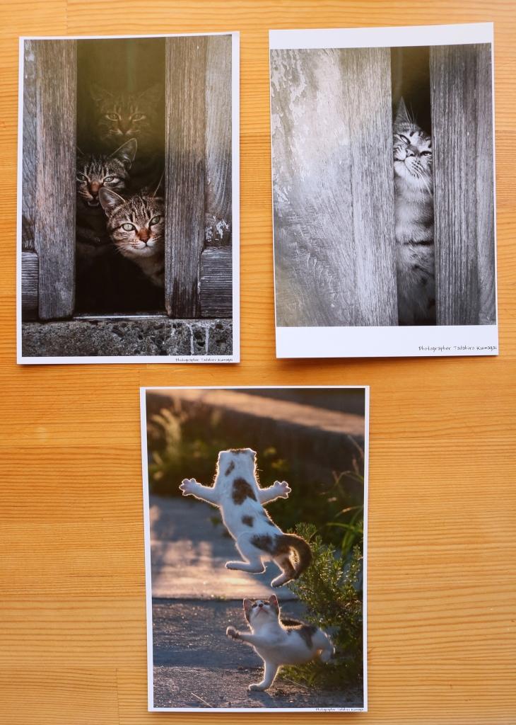 猫雑貨 猫グッズ 猫写真 ポストカード 秋田 かぎしっぽ