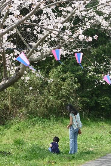 桜の木の下で・・・