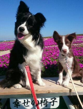 観光農園花ひろば 犬 コリー