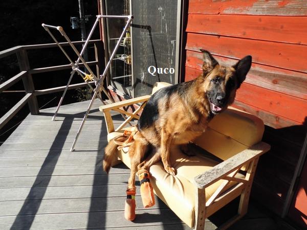 クコちゃん椅子に乗る