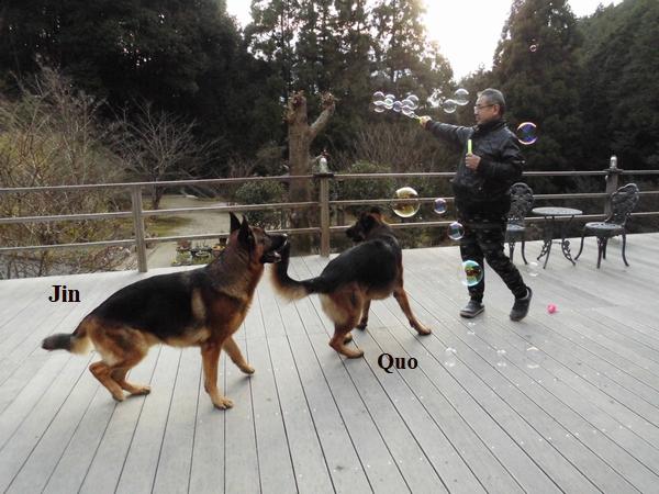 シャボン玉と犬1