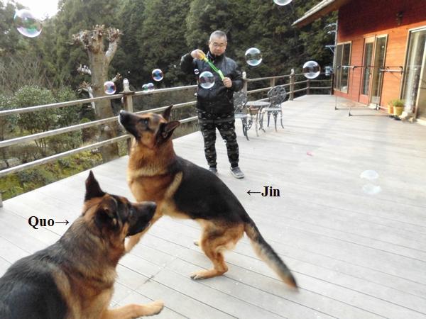 シャボン玉と犬2