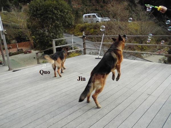 シャボン玉と犬3
