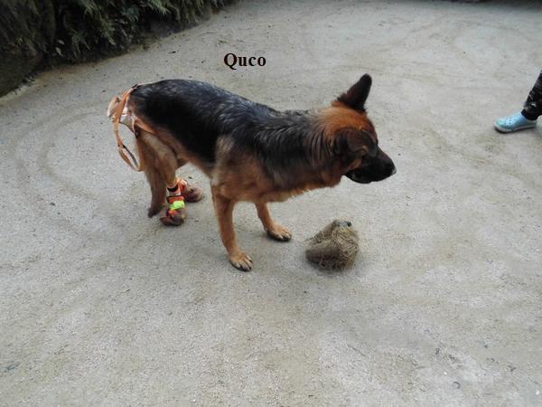 サッカーボールと犬2