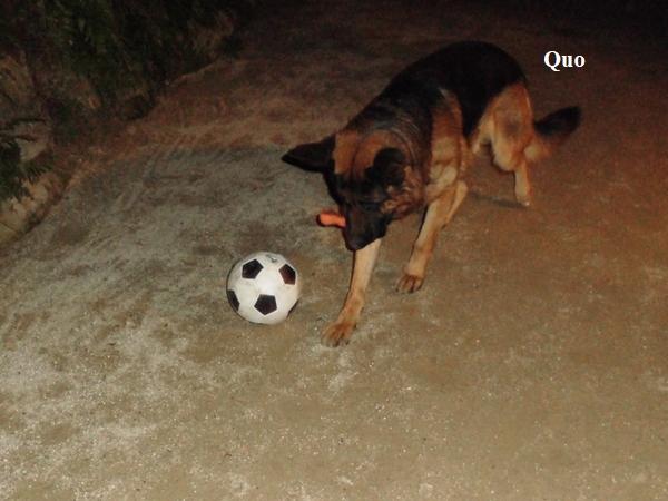 サッカーボールと犬3