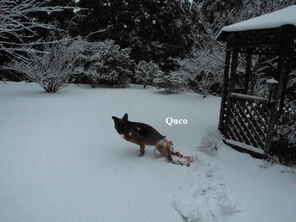 積雪クコちゃん1