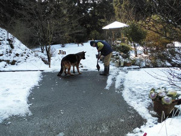 積雪の後始末4