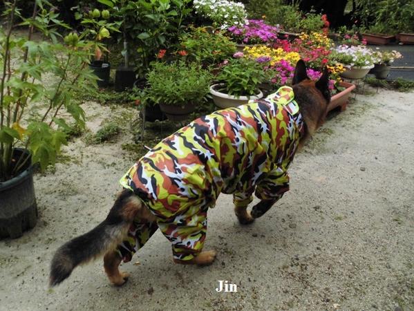大型犬レインコート2