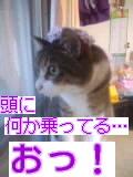 CA3F041900010001.jpg