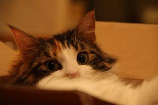 やっぱり箱が好き。