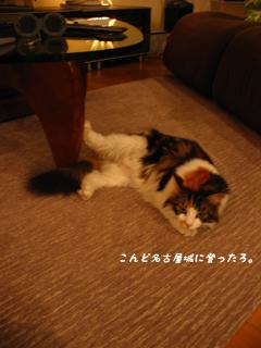 名古屋ネコ。