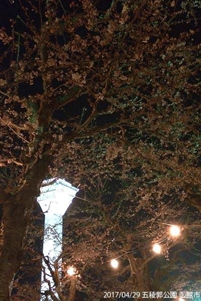 夜桜 五稜郭公園