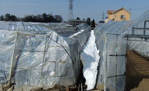 雪でつぶれた農業用ハウス