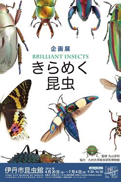 きらめく昆虫 伊丹昆虫館