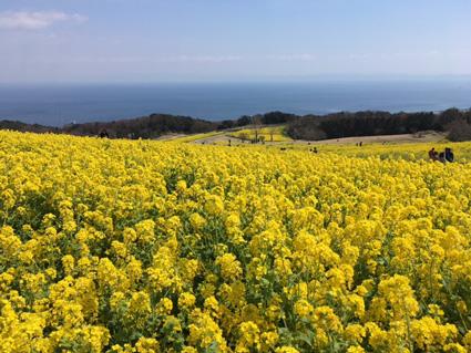 淡路島 花さじき
