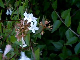 ナミアゲハの好きなお花♪