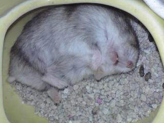 トイレで盗撮!!〜居眠りぷっぷ♪�