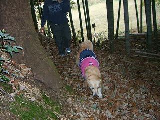 竹やぶの中。。かぐや姫はどこだ?