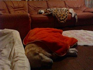 せっかくベッドがあるのに。。。2人とも 床とソファーで寝るなよーー。。