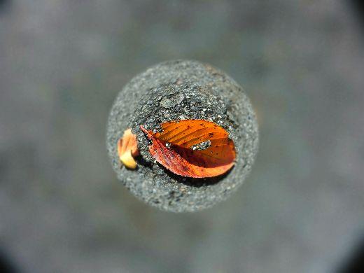 宙玉写真:落ち葉の色