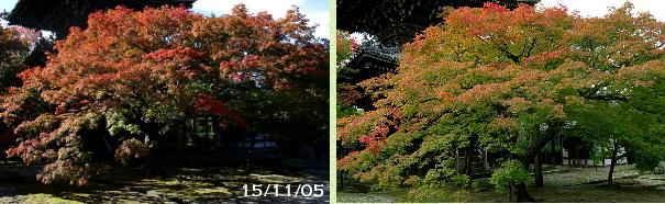 紅葉、真如堂比較