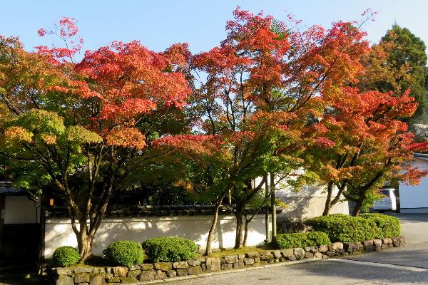 紅葉、永観堂