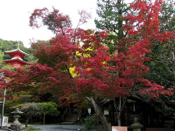 紅葉、今熊野観音寺