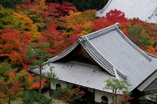 紅葉、圓光寺