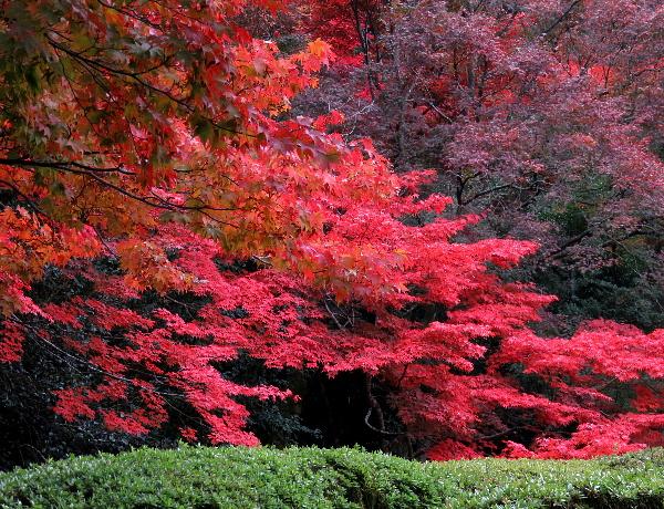 紅葉、詩仙堂