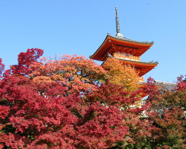 紅葉、清水寺