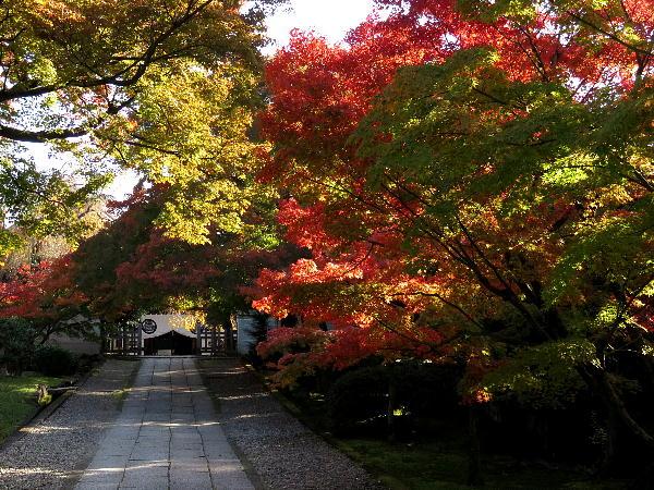 紅葉、養源院
