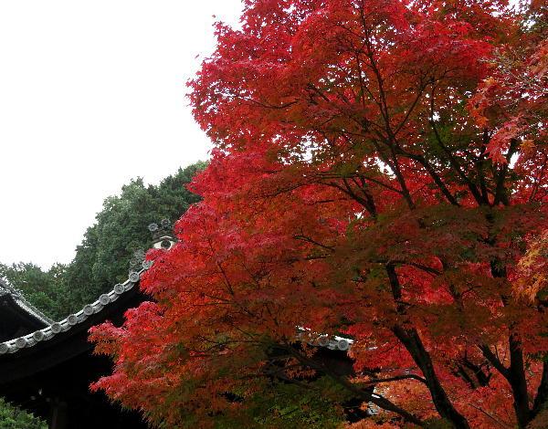 紅葉、東福寺