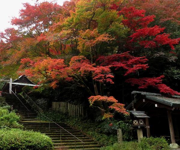 紅葉、日向大神宮