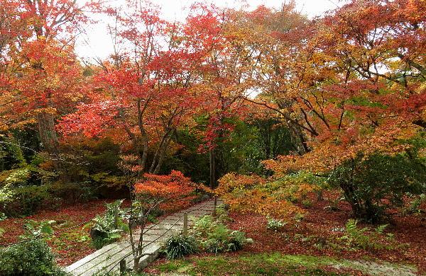 紅葉、宝筺院