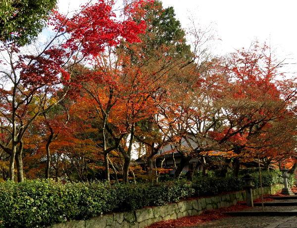 紅葉、真如堂